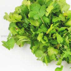korianderblaetter-frisch-coriander-leaves-hara-dhania