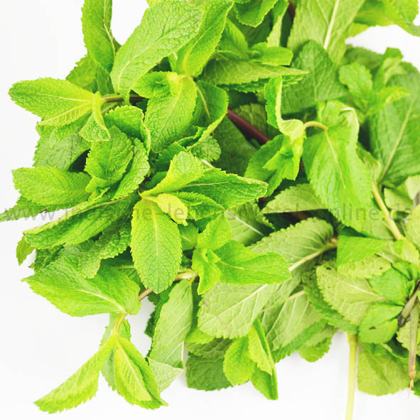 Minze, frisch, Mint Leaves, Pudina, 50g