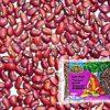 rote-azukibohnen-kuhbohnen-cow-peas-trs