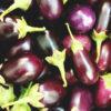 aubergine-frisch-egg-plant-brinjal-baingan-klein-indien
